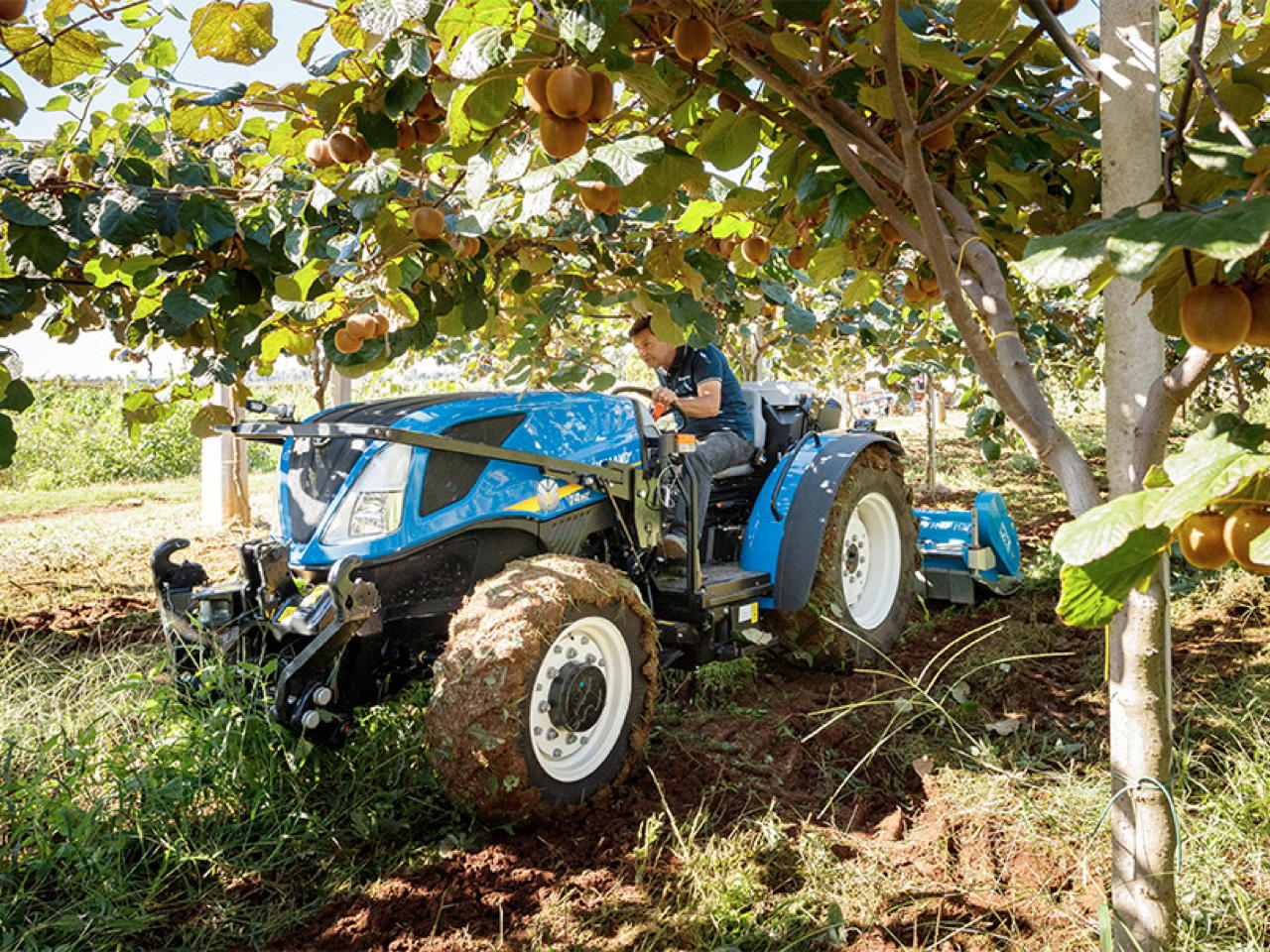 Immagine NEW HOLLAND T4.80 BASSOTTO